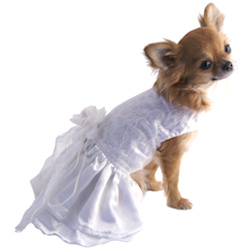 Wedding Dress with Lace Pearls & matching Leash