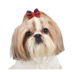 Plaid Dog Bow  - Red