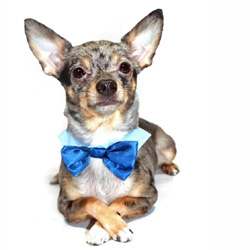 SATIN BOW TIE - BLUE (Pet Boutique)