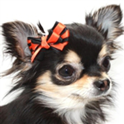 Orange & Black Hair Bow