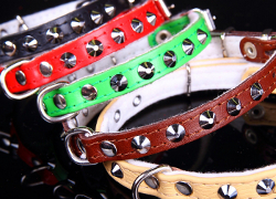 Leather Collar with Studs - Green